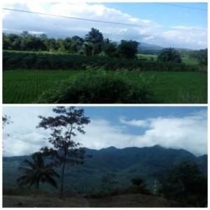 Jalur selatan Jawa Barat yang hijau